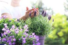 Bierze opiekę twój rośliny zdjęcie stock