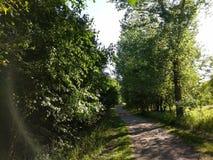 Bierze podwyżkę Przez natury przy twój Lesistym parkiem obraz royalty free