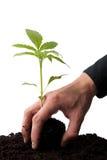 bierze potomstwa ręki roślina fotografia royalty free