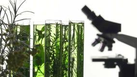 Bieslook, dille, thyme, basilicum, kerrie en munt in reageerbuizen stock videobeelden