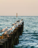 Biest in wooden poles Royalty Free Stock Photos