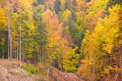 Bieszczady bergskog Royaltyfria Bilder