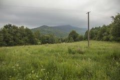 Bieszczady - een bergketen, Polen, Europa; groene weiden en heuvels stock afbeelding