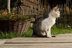 Bieszczady, gatto, casa del cottage, azienda agricola, Fotografie Stock Libere da Diritti