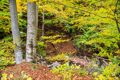Bieszczady mountains forest Royalty Free Stock Photos