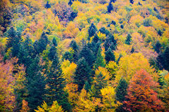 Bieszczady mountains forest Royalty Free Stock Image