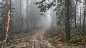 Bieszczady Mountains. Misterious forest in Mountains covered by mist. Bieszczady Mountains - beautiful landscape footage in full HD. Misterious forest in stock footage