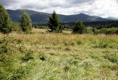 Bieszczady mountains, Poland. Clearing in the woods,Bieszczady mountains, Poland Royalty Free Stock Photos