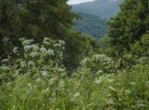 Bieszczady, Polen - bloemrijke weiden en heuvels royalty-vrije stock afbeelding