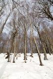Bieszczady Winter Royalty Free Stock Photography