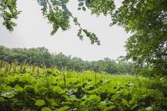 Bieszczadybergen, Zuid-Polen - bomen en weiden stock afbeeldingen