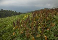 Bieszczadybergen, Zuid-Polen, Europa - heuvels en groene weiden stock foto's
