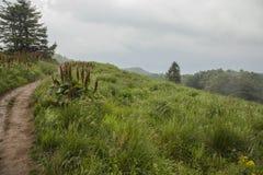 Bieszczadybergen, Zuid-Polen - heuvels en groene weiden royalty-vrije stock afbeelding