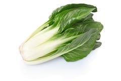 Biet of Bèta vulgaris stock afbeelding