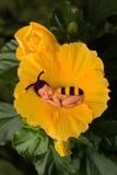 Biet behandla som ett barn i blomma royaltyfria foton