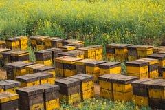 Biet bygga bo på en blommaträdgård Royaltyfri Foto