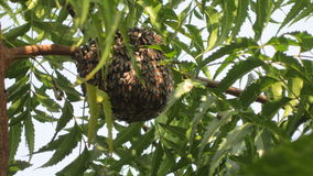 biet detailed honung isolerade makroen staplade mycket white Royaltyfria Bilder