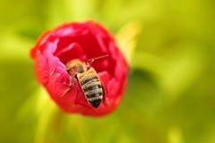 biet detailed honung isolerade makroen staplade mycket white fotografering för bildbyråer