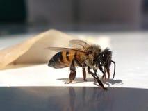 biet detailed honung isolerade makroen staplade mycket white Arkivfoton