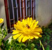 Biet på blomman royaltyfri foto
