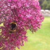 biet stapplar Arkivbilder