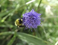 biet stapplar arkivfoto