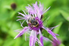 biet stapplar blomman Arkivbilder