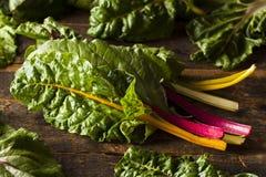 Bietola organica cruda dell'arcobaleno Fotografie Stock