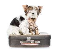 Biewer-Yorkshire terrier and bengal cat sitting on a bag. isolated Royalty Free Stock Images