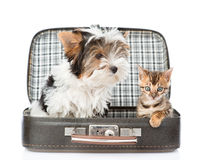 Biewer-Yorkshire terrier and bengal cat sitting in a bag. isolated Royalty Free Stock Images