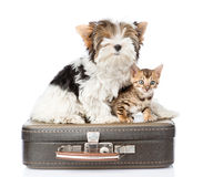Biewer-Yorkshire terrier and bengal cat sitting on a retro bag. isolated Royalty Free Stock Image