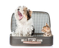 Biewer-Yorkshire terrier and bengal cat sitting in a suitcase. i Stock Photos