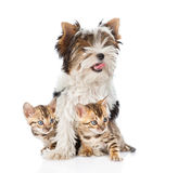 Biewer-Yorkshire terrier puppy and two bengal kittens.  Royalty Free Stock Images