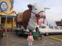 Biffar inhyser i Texas Royaltyfri Foto