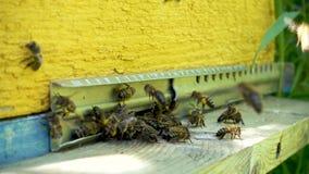 Bifluga i magasinet Ingång till bikupan arkivfilmer