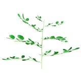 Bifoliate plant Stock Image