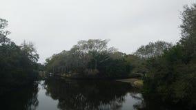 Bifurcación en The Creek Foto de archivo