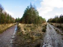 Bifurcación en el bosque Fotografía de archivo