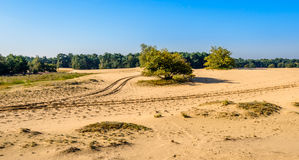 Bifurcation of tire tracks in a desertlike Dutch nature reserve Stock Photos