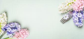 Bifurque con las flores del jacinto de la primavera en el fondo rústico lamentable verde claro, visión superior, bandera Foto de archivo libre de regalías