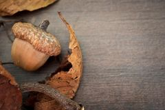 A big acorn. With a twig and leafs on a wooden background Stock Images