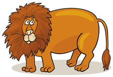 Big african lion Stock Images