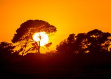 Big African tree silhouette. Over sunset Royalty Free Stock Photos