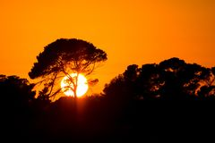 Big African tree silhouette stock photos
