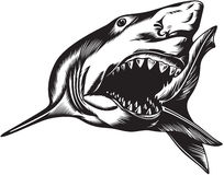 Big aggressive shark. With open mouth Stock Photography