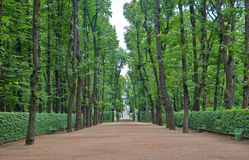 Big alley in the Summer Gardens park in Saint-Petersburg Stock Image