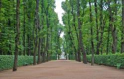 Big alley in the Summer Gardens park in Saint-Petersburg Stock Image