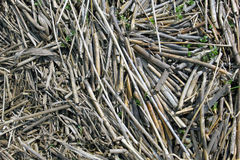 Big amount of the dry grass straws laying on the ground Royalty Free Stock Images