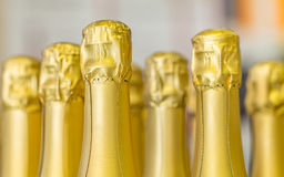 Big amount of golden champagne bottles necks and top caps at standing the light background Stock Photo