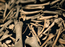 The big amount of little bones laying on the black table macro s Royalty Free Stock Photos